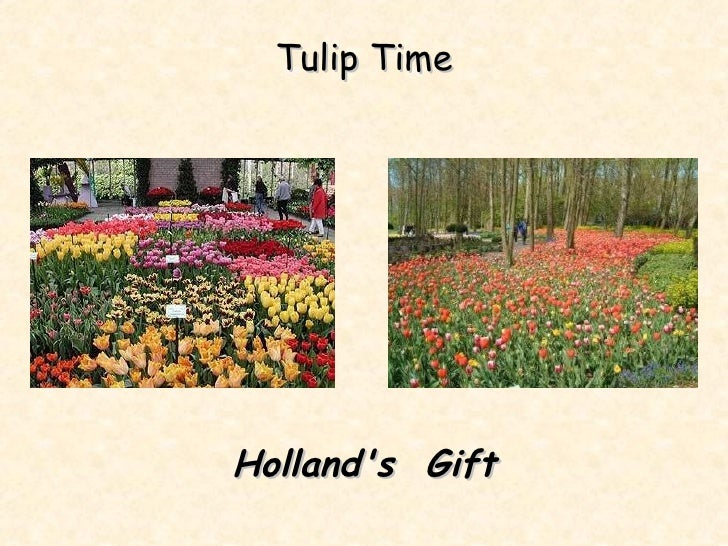 Tulip Time Holland's  Gift