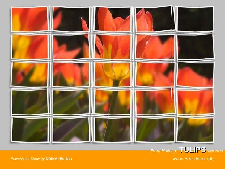 From Holland:   TULIPS  with love! PowerPoint Show by   DOINA (Ro-NL)  Music:  Andre Hazes (NL)