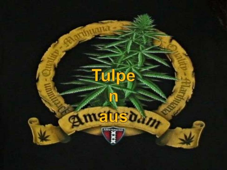 Tulpen<br />aus<br />