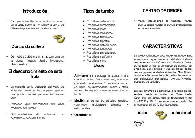 Introducción                                   Tipos de tumbo                                 CENTRO DE ORIGEN•    Esta pl...