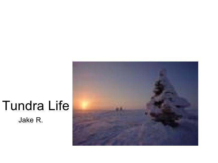 Tundra Ppt Ramstetter