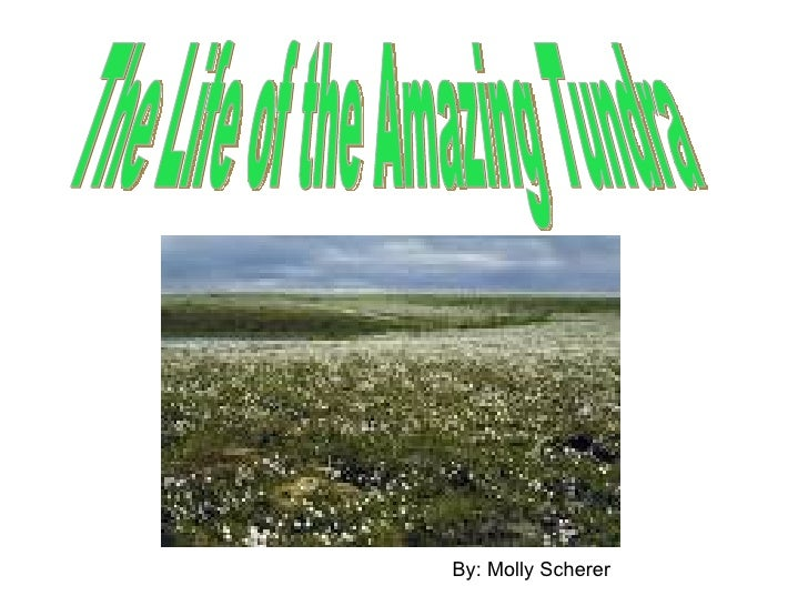 The Life of the Amazing Tundra By: Molly Scherer