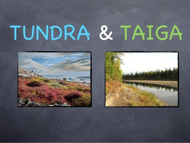 TUNDRA & TAIGA