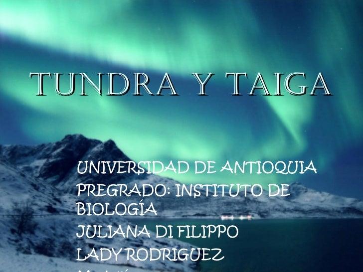 TUNDRA Y TAIGA UNIVERSIDAD DE ANTIOQUIA PREGRADO: INSTITUTO DE BIOLOGÍA JULIANA DI FILIPPO LADY RODRIGUEZ Medellín 2010