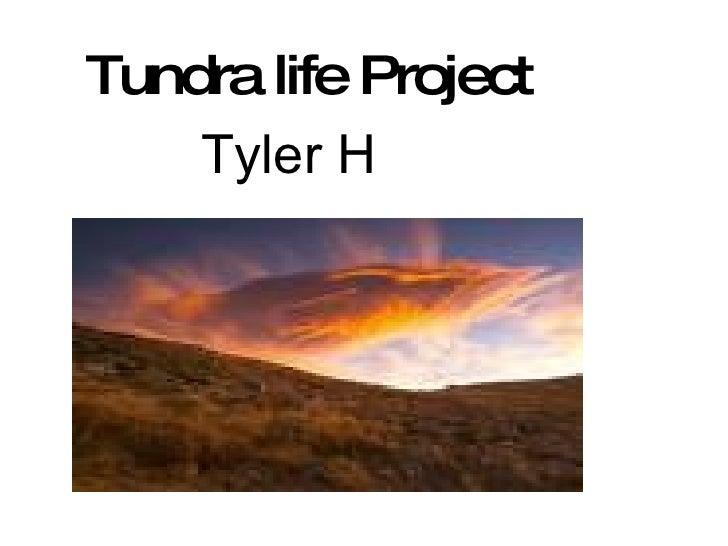 Tundra life Project Tyler H