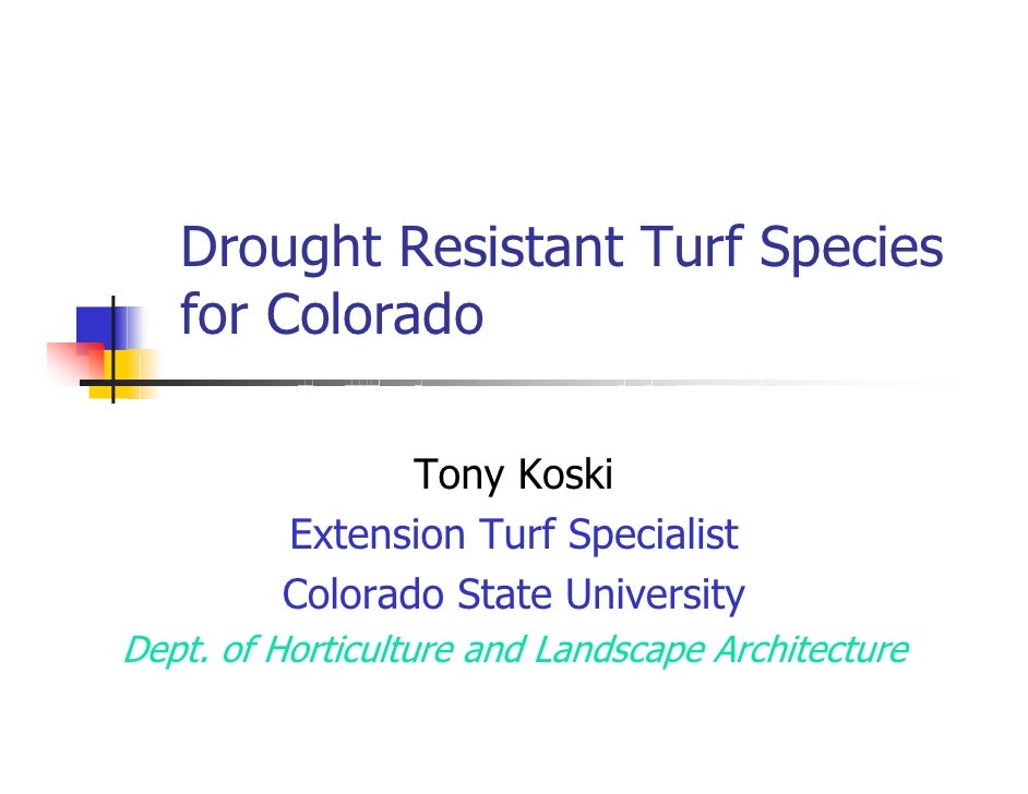 Drought Resistant Turf Species    for Colorado                  Tony Koski          Extension Turf Specialist          Col...