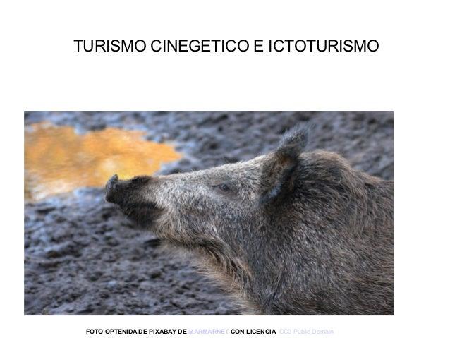 FOTO OPTENIDA DE PIXABAY DE MARMARNET CON LICENCIA CC0PublicDomain TURISMOCINEGETICOEICTOTURISMO