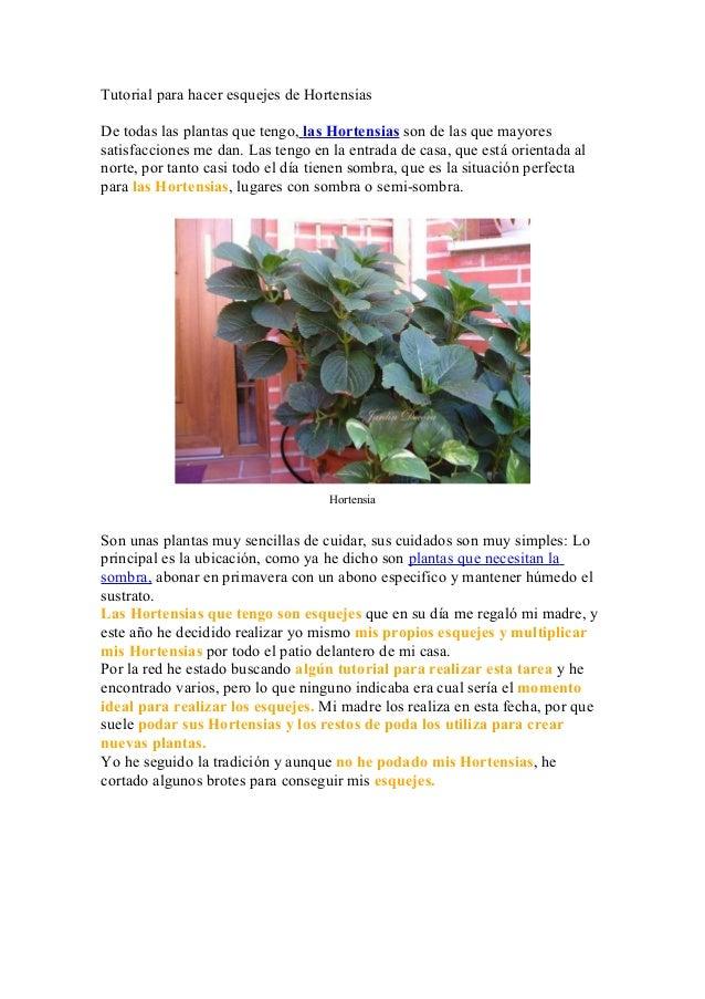 Tutorial para hacer esquejes de HortensiasDe todas las plantas que tengo, las Hortensias son de las que mayoressatisfaccio...