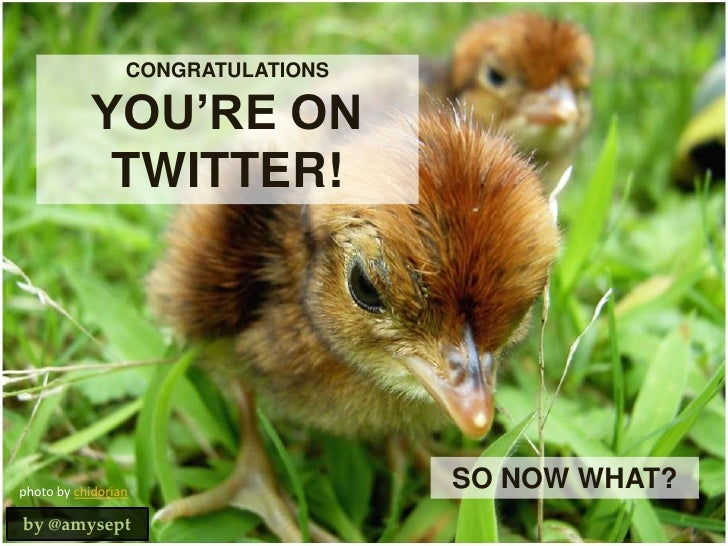 CONGRATULATIONS<br />YOU'RE ON TWITTER!<br />SO NOW WHAT?<br />photo by chidorian<br />by @amysept<br />