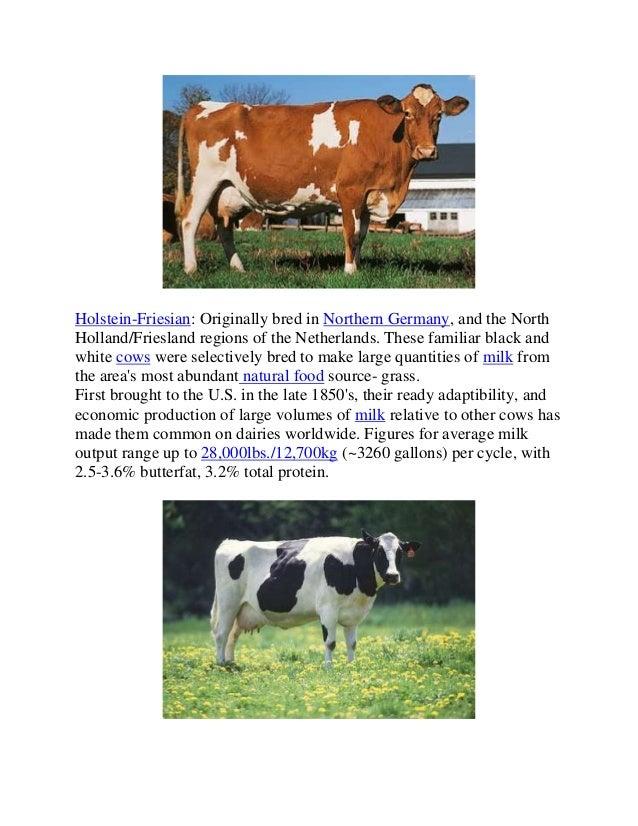selective breeding worksheet
