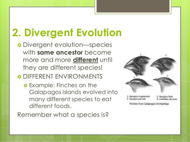 Convergent Evolution vs Divergent Divergent Evolution
