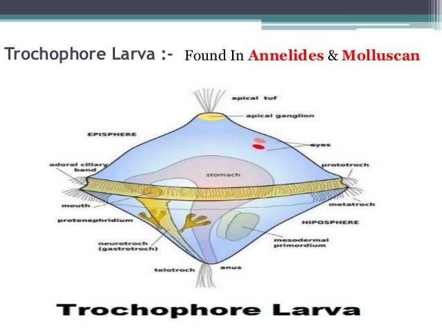 Types Of Larva on Earthworm Dissection