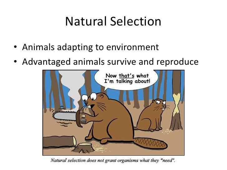 Natural Selection Giraffe Neck