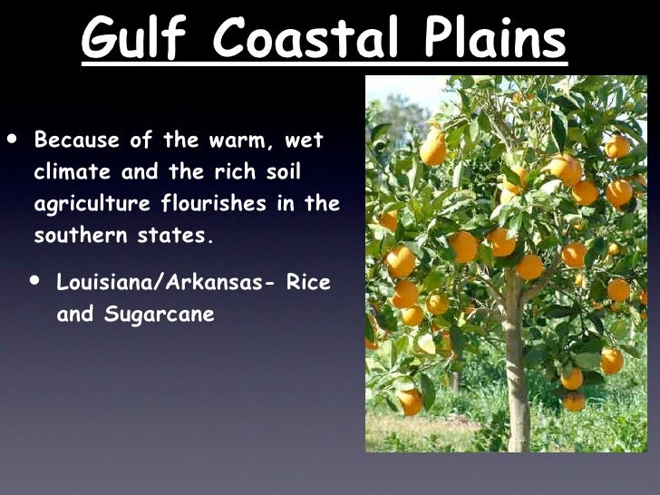 East Gulf Coastal Plain Louisiana Gulf Coastal Plains • Because