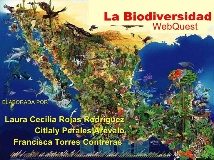 La Biodiversidad ELABORADA POR Laura Cecilia Rojas Rodríguez Citlaly Perales Arévalo Francisca Torres Contreras  WebQuest