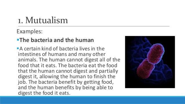 List of Good Bacteria  Healthy Eating  SF Gate