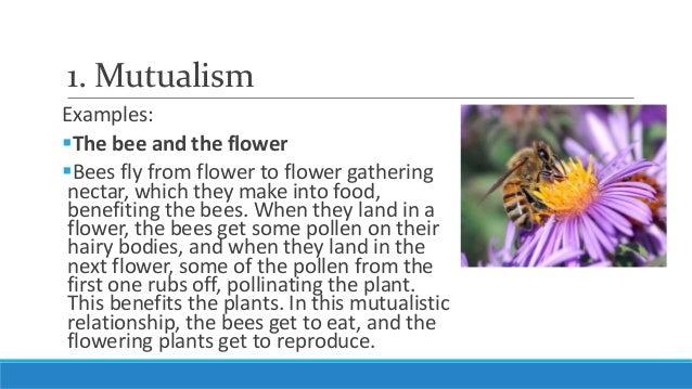 Unit 5 Lesson 5 3 Ecological Relationships