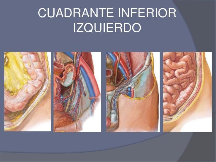 Ubicacion de los organos en cuadrantes for Interior izquierdo