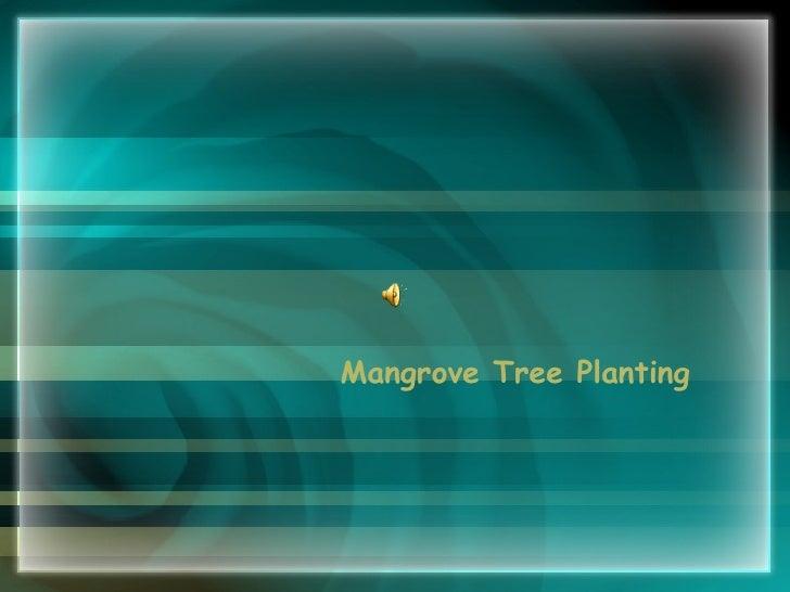 Mangrove Tree Planting