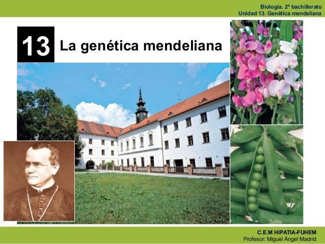 Biología. 2º bachillerato Unidad 13. Genética mendeliana C.E.M HIPATIA-FUHEM Profesor: Miguel Ángel Madrid 13 La genética ...