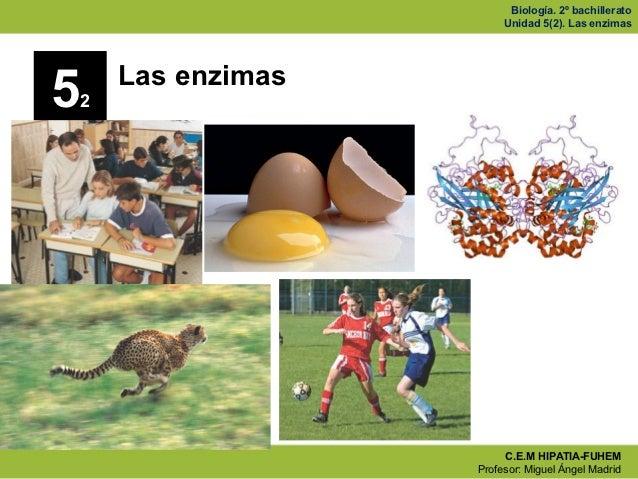 Biología. 2º bachillerato                           Unidad 5(2). Las enzimas        Las enzimas5   2                      ...