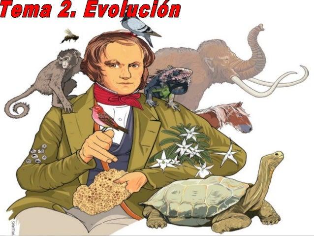 Ud 2. evolucion