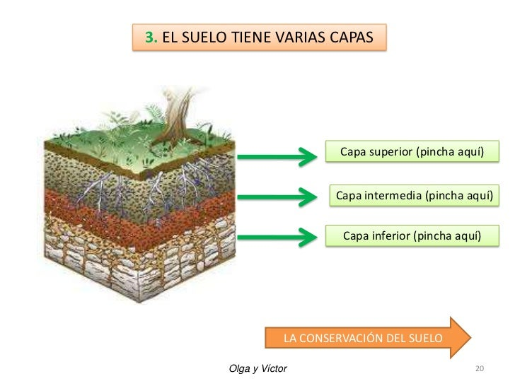 Tres etapas de formacion del suelo for Como se forma y desarrolla el suelo