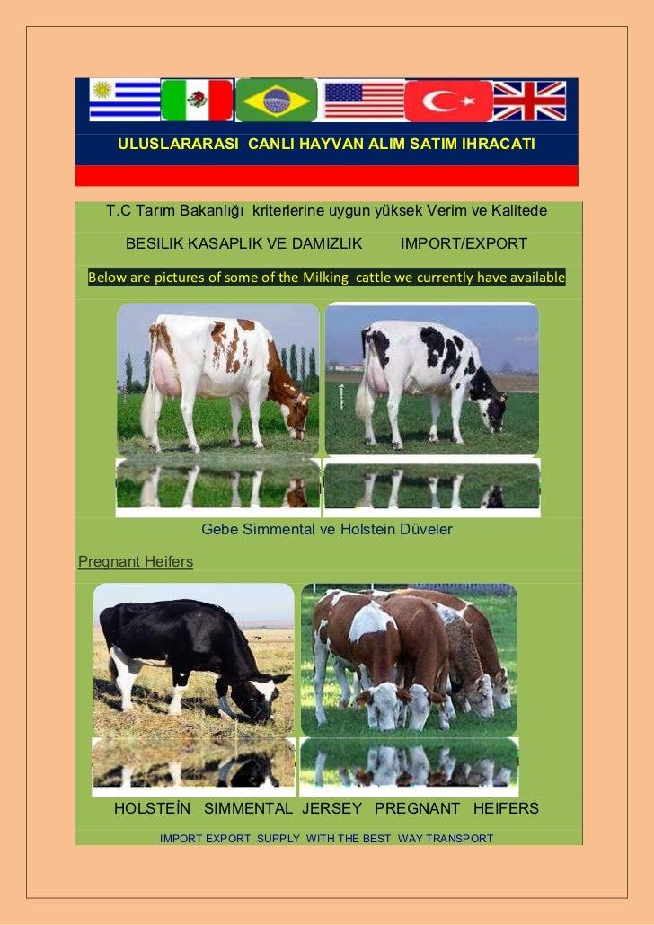 ULUSLARARASI CANLI HAYVAN ALIM SATIM IHRACATI   T.C Tarım Bakanlığı kriterlerine uygun yüksek Verim ve Kalitede      BESIL...
