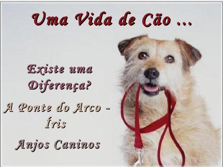 A Ponte do Arco - Íris   Anjos Caninos Existe uma Diferença? Uma Vida de Cão ...