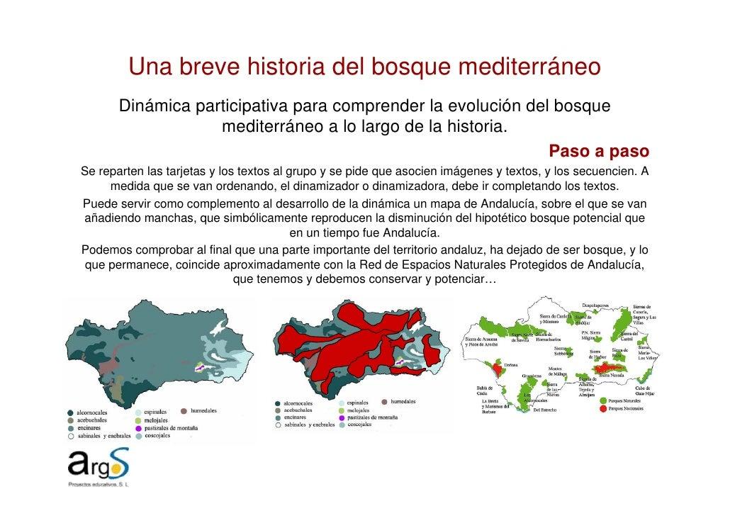Una breve historia del bosque mediterráneo        Dinámica participativa para comprender la evolución del bosque          ...