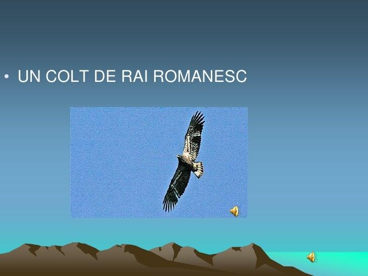 • UN COLT DE RAI ROMANESC