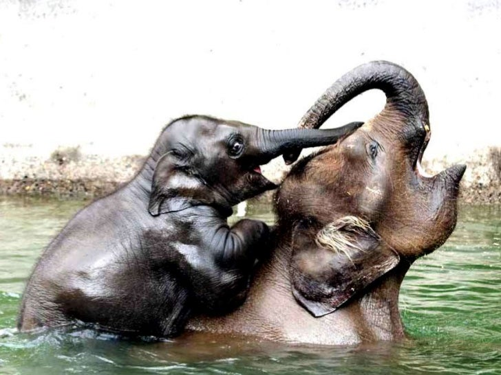 Unconditional Mothers Love