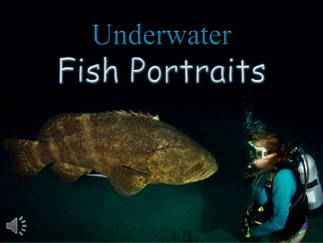 Underwater fish portraits. (v.m.)