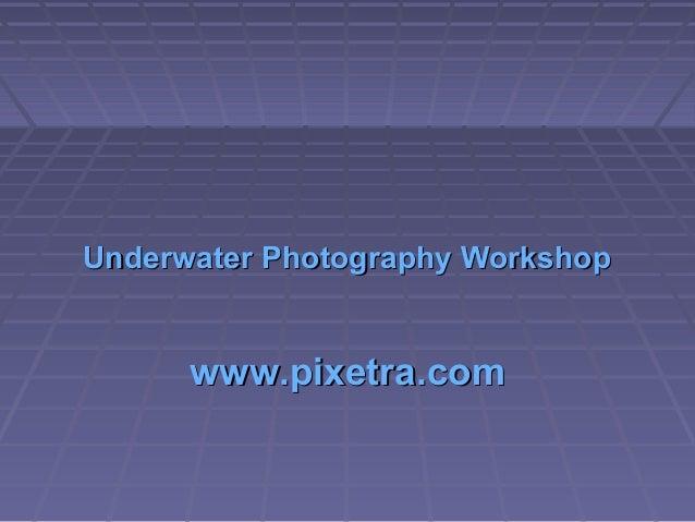 Underwater Photography WorkshopUnderwater Photography Workshop www.pixetra.comwww.pixetra.com