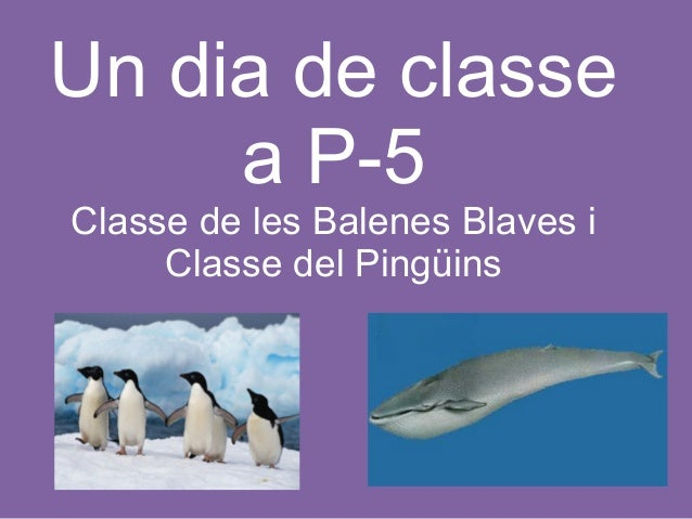 Un dia de classe a P-5  (Escola Princesa Sofia de Mollet del Vallès)