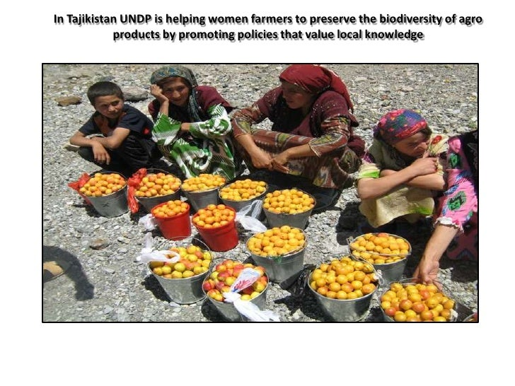 In Tajikistan UNDP is helping women farmers to preserve the biodiversity of agro            products by promoting policies...