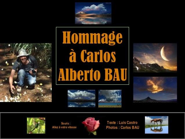 Souris : Allez à votre vitesse e TexteTexte : Luis Castro: Luis Castro Photos : Carlos BAUPhotos : Carlos BAU HommageHomma...