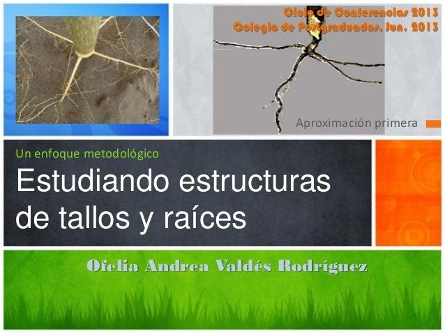 Un enfoque metodológico Estudiando estructuras de tallos y raíces Aproximación primera Ciclo de Conferencias 2013 Colegio ...