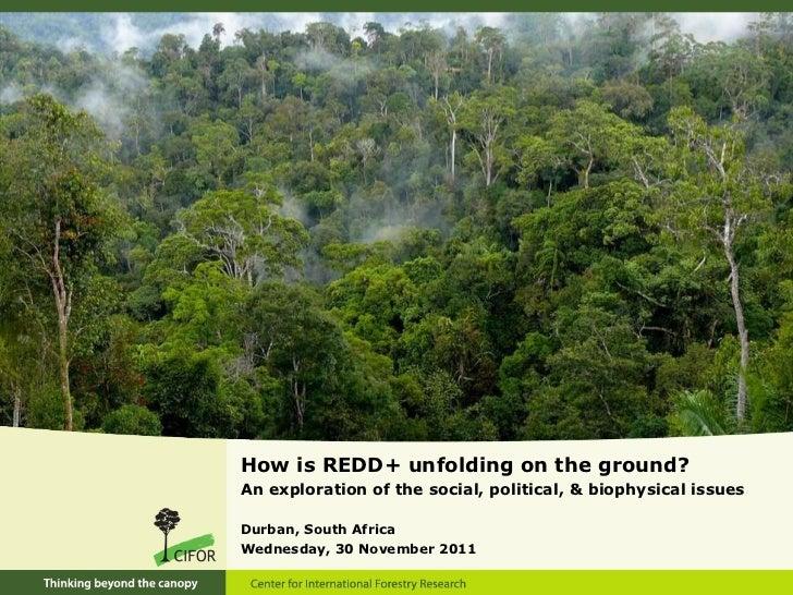 <ul><li>How is REDD+ unfolding on the ground? </li></ul><ul><li>An exploration of the social, political, & biophysical iss...