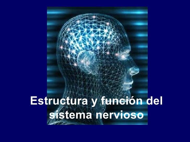 Estructura y función del   sistema nervioso