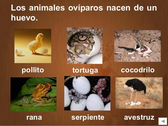 los-animales-11-638.jpg?cb= ...