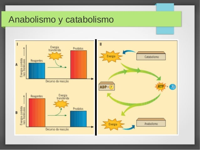 reacciones metabolicas catabolicas y anabolicas