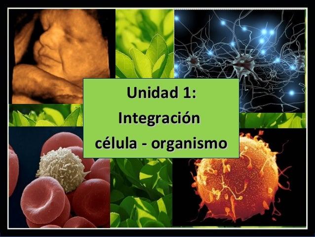 Unidad 1:   Integracióncélula - organismo