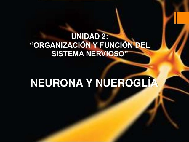 """UNIDAD 2: """"ORGANIZACIÓN Y FUNCIÓN DEL SISTEMA NERVIOSO"""" NEURONA Y NUEROGLÍA"""