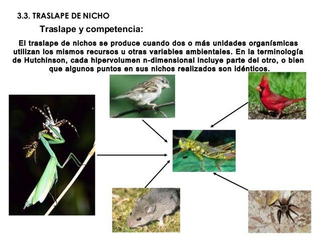3.3. TRASLAPE DE NICHOTraslape y competencia:El traslape de nichos se produce cuando dos o más unidades organísmicasutiliz...