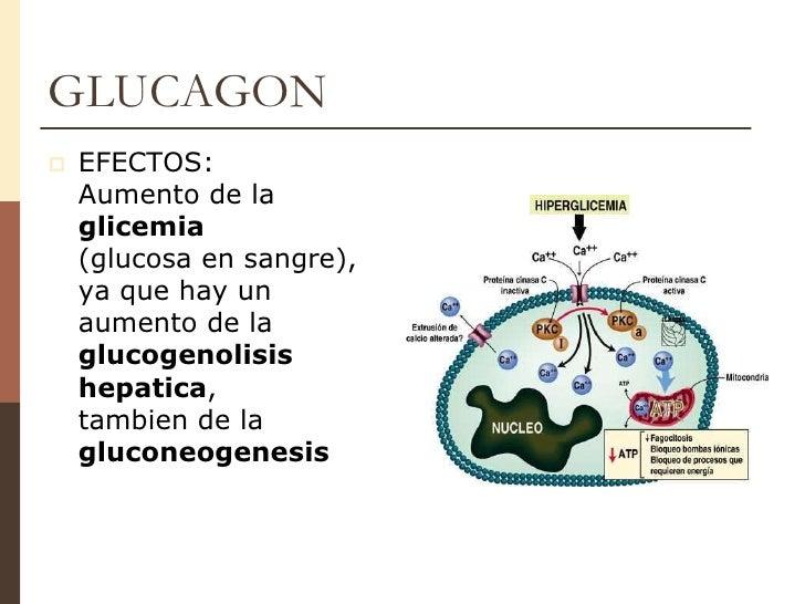Unidad 7 insulina & glucagon