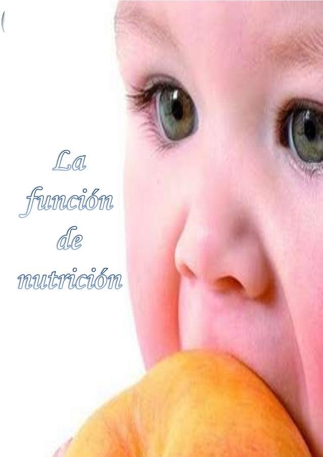 La función de nutrición 1