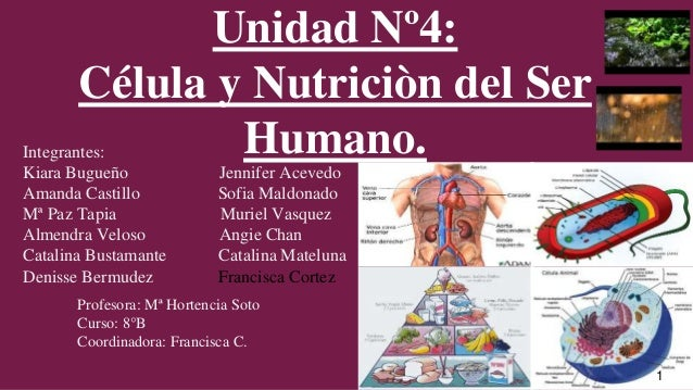 Unidad Nº4: Célula y Nutriciòn del Ser Humano.Integrantes: Kiara Bugueño Jennifer Acevedo Amanda Castillo Sofia Maldonado ...