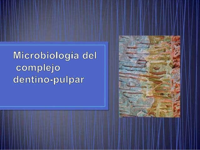 • A pesar de la protección natural de la pulpa esta puede ser infectada. • Normalmente es fácil fagocitar y eliminar las b...