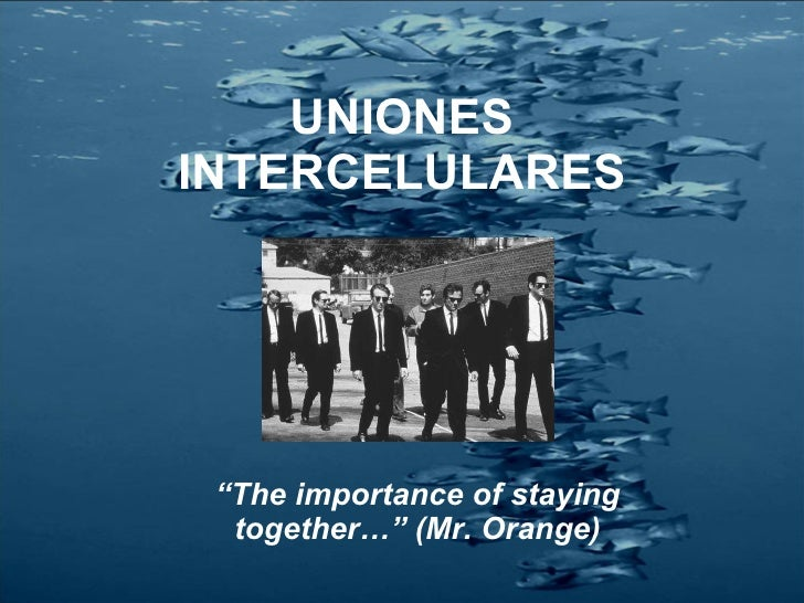 "UNIONES INTERCELULARES "" The importance of staying together…"" (Mr. Orange)"